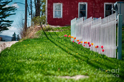 Photograph - Tulips In Tune In Tupper Lake by Patricia Trudell