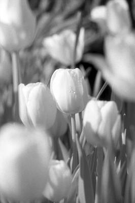 Photograph - Tulips - Infrared 10 by Pamela Critchlow