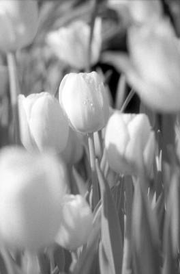 Photograph - Tulips - Infrared 11 by Pamela Critchlow