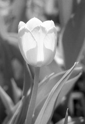 Photograph - Tulips - Infrared 29 by Pamela Critchlow