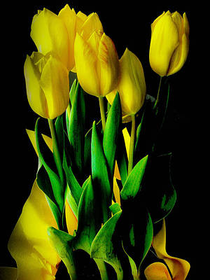 Art Print featuring the photograph Tulips by Joseph Hollingsworth