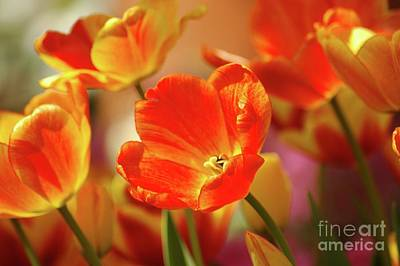 Tulips Print by Kathleen Struckle