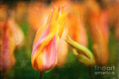 Digitally Created Photograph - Tulips by Katka Pruskova