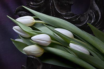 Floral Photograph - Tulips Laying In Wait by Tom Mc Nemar