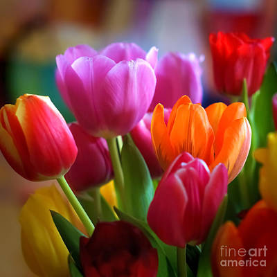 Flora Photograph - Tulips Light by Lutz Baar