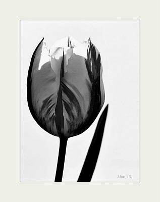 Art Print featuring the photograph The Light Within by Marija Djedovic