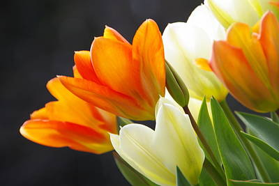 Art Print featuring the photograph Tulips by Marilyn Wilson