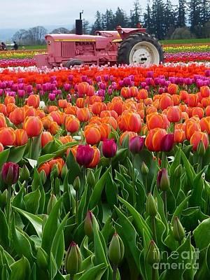 Photograph - Tulips Meet Pink John Deere by Susan Garren