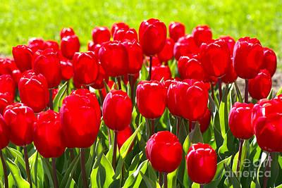 Tulips Art Print by Nur Roy