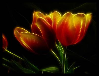 Tulips Of Light Art Print by Shannon Story