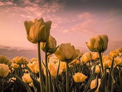 Tulips On A Pink Sky Art Print by Yvon van der Wijk