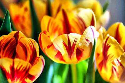 Photograph - Tulips On Fire by Brian Davis