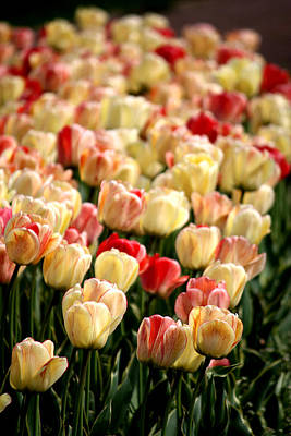Photograph - Tulips On Parade by Penny Hunt