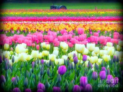 Photograph - Tulips Outshine Tractor by Susan Garren