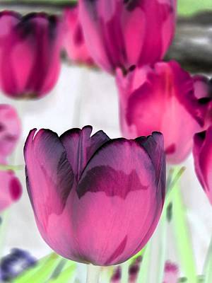 Photograph - Tulips - Perfect Love - Photopower 2027 by Pamela Critchlow