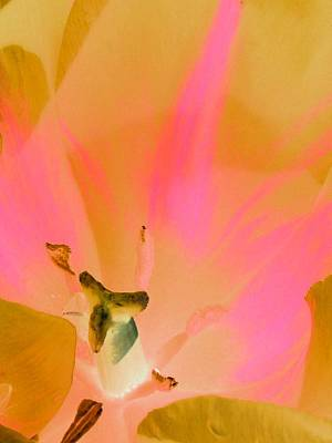 Photograph - Tulips - Perfect Love - Photopower 2033 by Pamela Critchlow