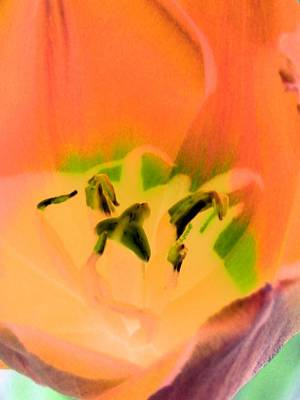 Photograph - Tulips - Perfect Love - Photopower 2050 by Pamela Critchlow