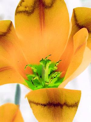 Photograph - Tulips - Perfect Love - Photopower 2060 by Pamela Critchlow
