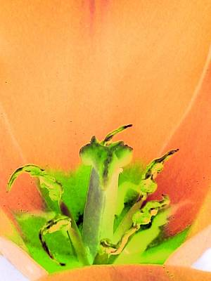Photograph - Tulips - Perfect Love - Photopower 2061 by Pamela Critchlow