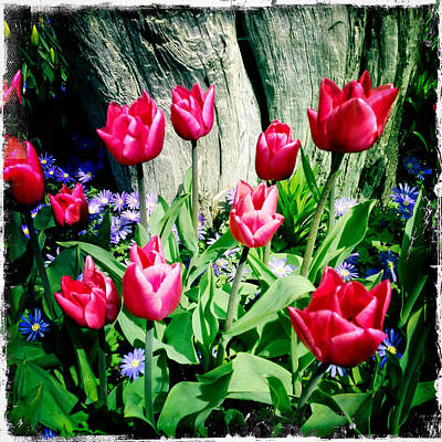 Photograph - Tulips by Randy Green