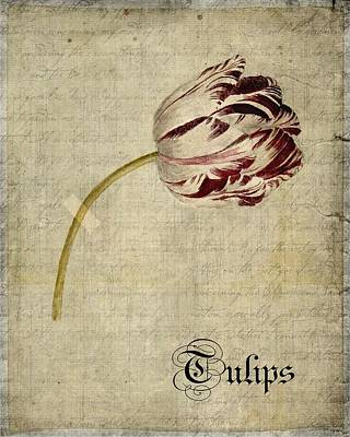 Tulips Digital Art - Tulips - S01bt2t by Variance Collections