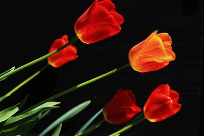 Tulips Art Print by Shelley Neff