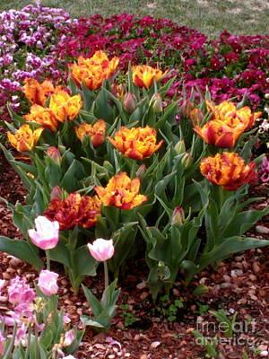 Photograph - Tulips by Sherri Williams