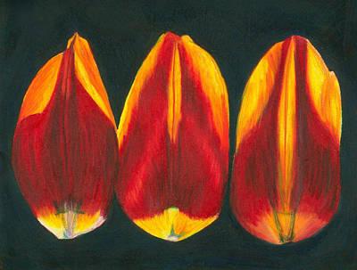 Wall Art - Drawing - Tulip Petals Still Life by Kerrie B Wrye