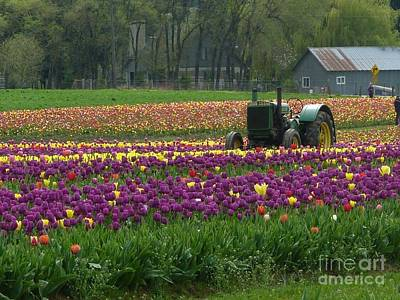 Photograph - Tulips Surround  by Susan Garren