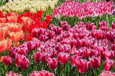 Photograph - Tulips by Susan Leonard