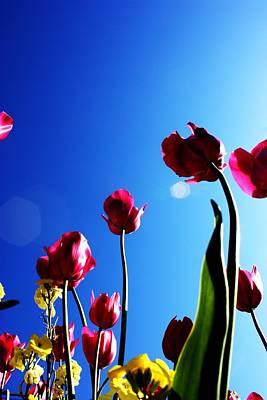 Photograph - Tulips by Tara Lowry