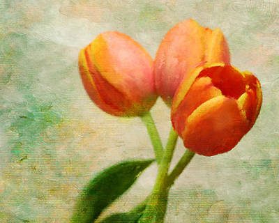 Photograph - Tulips Three by David and Carol Kelly