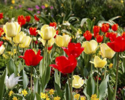 Tulips Through Window Original by Frank Savarese