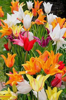 Art Print featuring the photograph Tulips Tulips by Haleh Mahbod