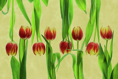 Pattern Photograph - Tulips by Udo Dittmann