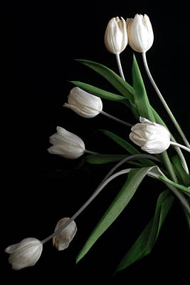 Photograph - Tulips V by Michael Moschogianis