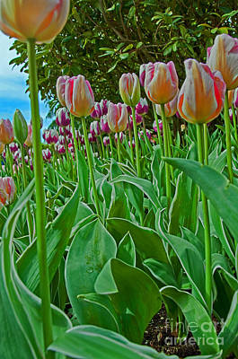 Photograph - Tulips Vertical In Low Viewpoint by Valerie Garner