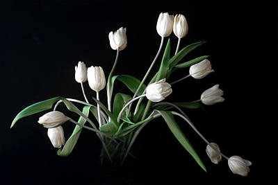 Photograph - Tulips Vi by Michael Moschogianis