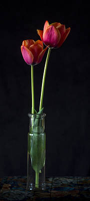 Photograph - Tulips by Wayne Meyer