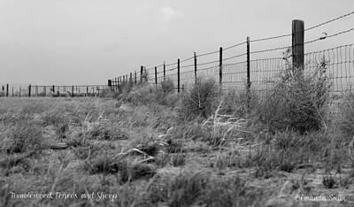 Photograph - Tumbleweed Fences And Sheep by Amanda Smith