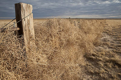 After The Storm Photograph - Tumbleweeds by Melany Sarafis