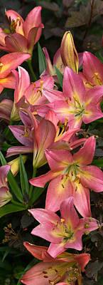 Photograph - Tumbling Lilies by Leda Robertson