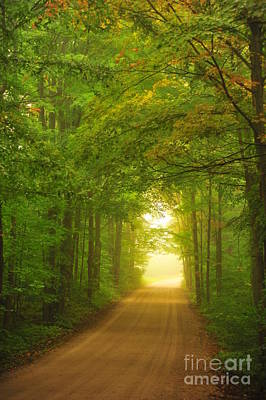 Autumn Photograph - Tunnel In The Forest by Terri Gostola