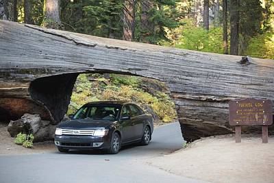 Fir Trees Photograph - Tunnel Log A Fallen Giant Redwood by Ashley Cooper