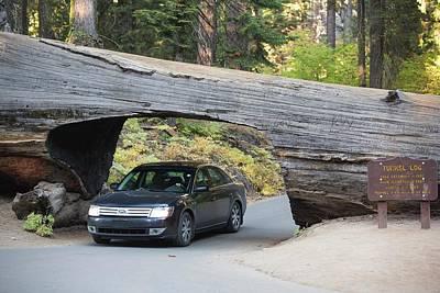 Tunnel Log A Fallen Giant Redwood Art Print