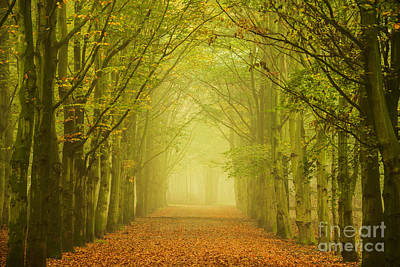 Photograph - Tunnel Of Light In A Forest Of Trees by IPics Photography