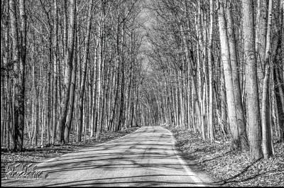 Trillium S Photograph - Tunnel Of Trees Black And White by LeeAnn McLaneGoetz McLaneGoetzStudioLLCcom