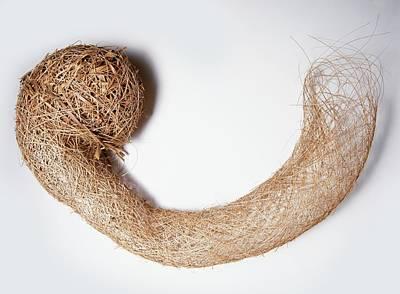 Tunnel Shaped Nest Of A Weaver Bird Art Print by Dorling Kindersley/uig
