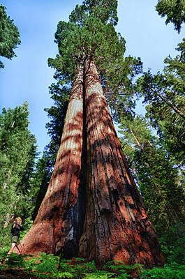 Videographer Photograph - Tuolumne Grove, Yosemite National Park by Mark Williford