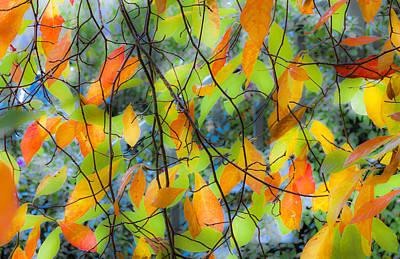 Tupelo Tapestry - Glowing Leaves Print by Saxon Holt